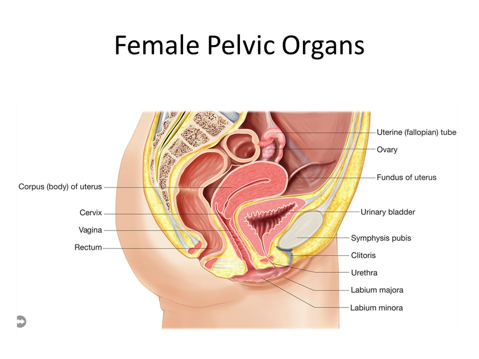 Pelvic Surgical Anatomy Ppt Video Online Download
