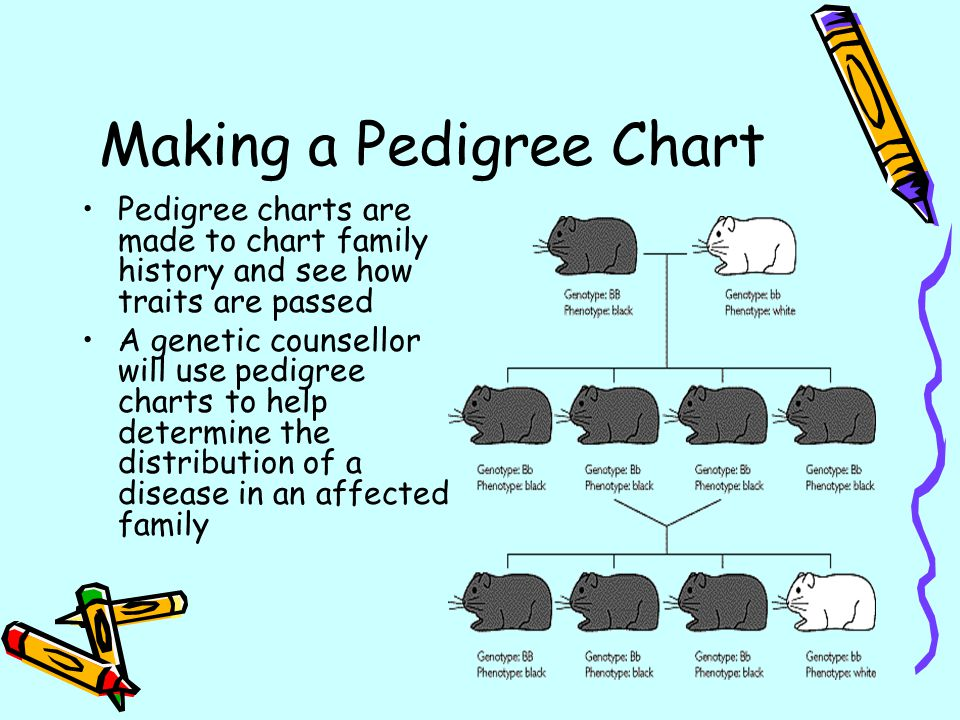 Making A Pedigree Chart Ppt Download
