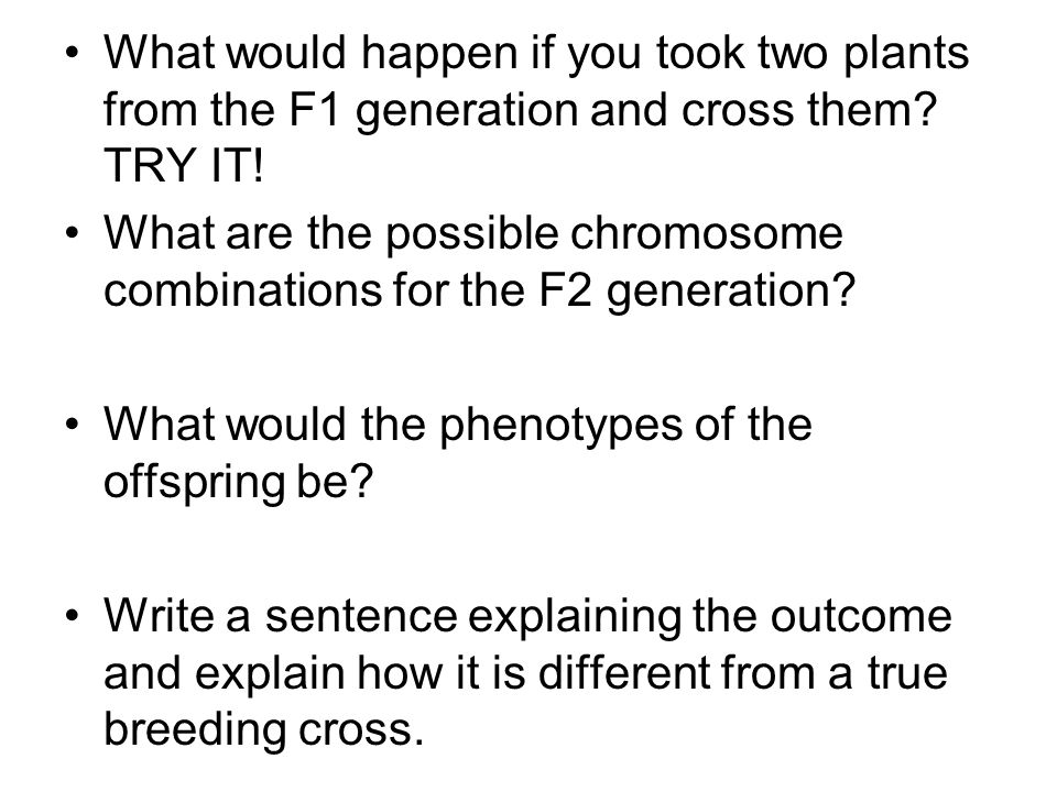 What would happen if you took two plants from the F1 generation and cross them TRY IT!