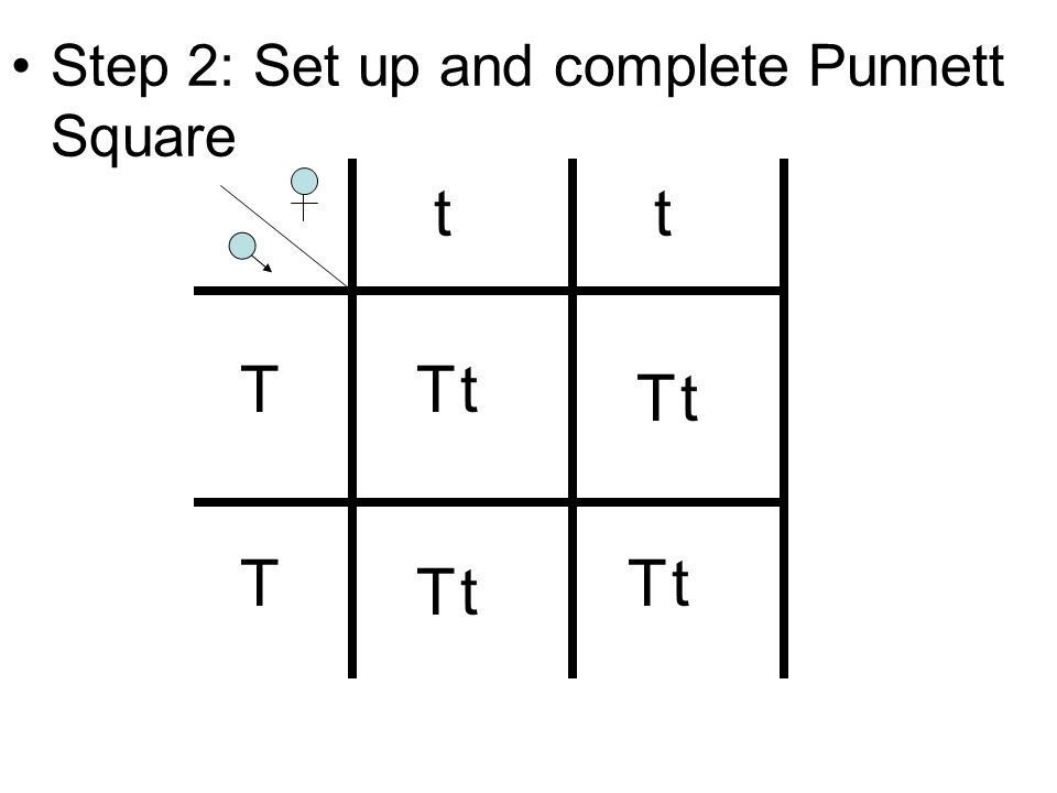 Step 2: Set up and complete Punnett Square