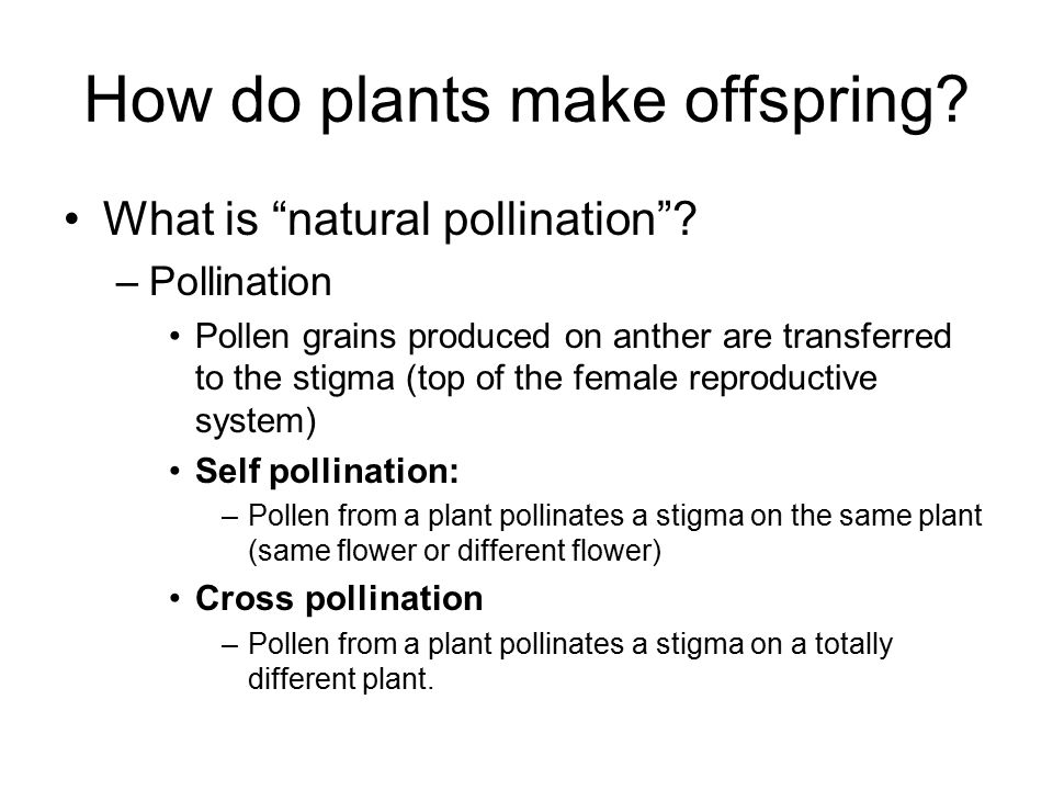How do plants make offspring