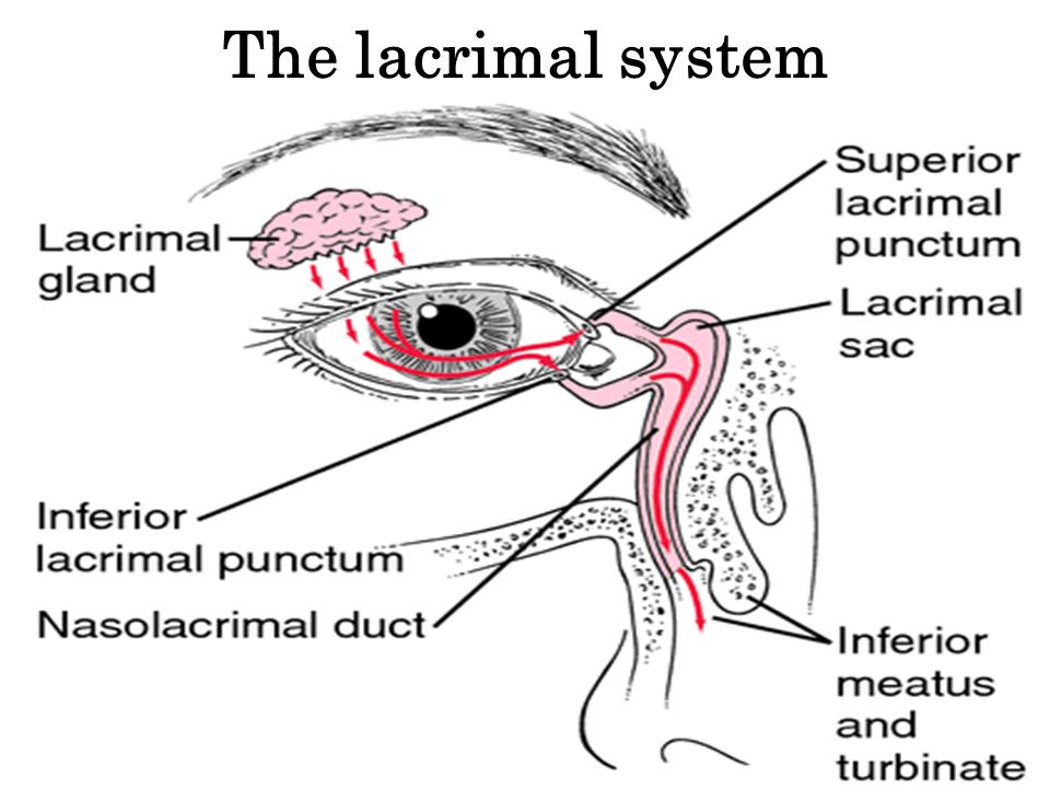 Orbit, Lid and Lacrimal disorders - ppt video online download