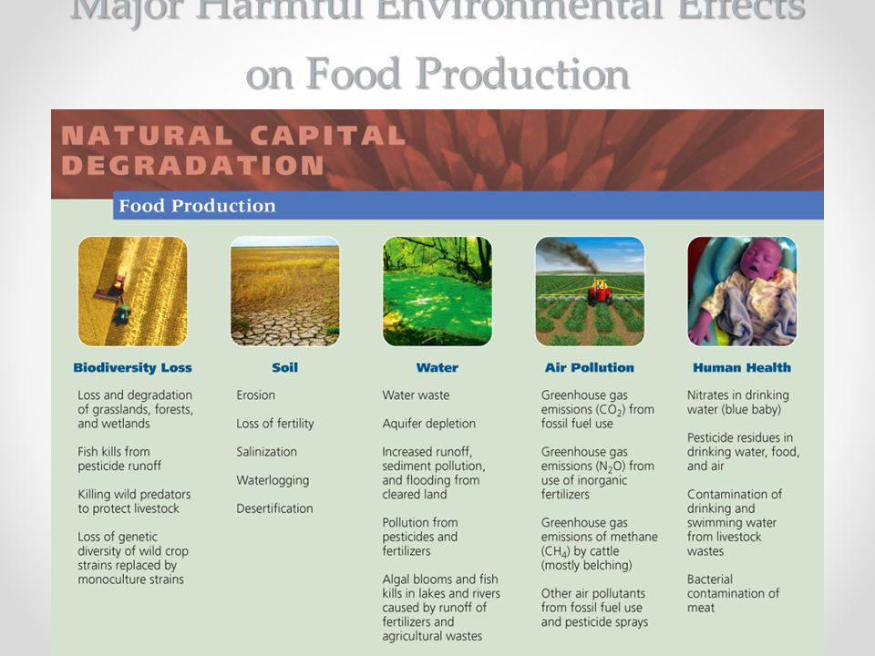 Major Harmful Environmental Effects on Food Production