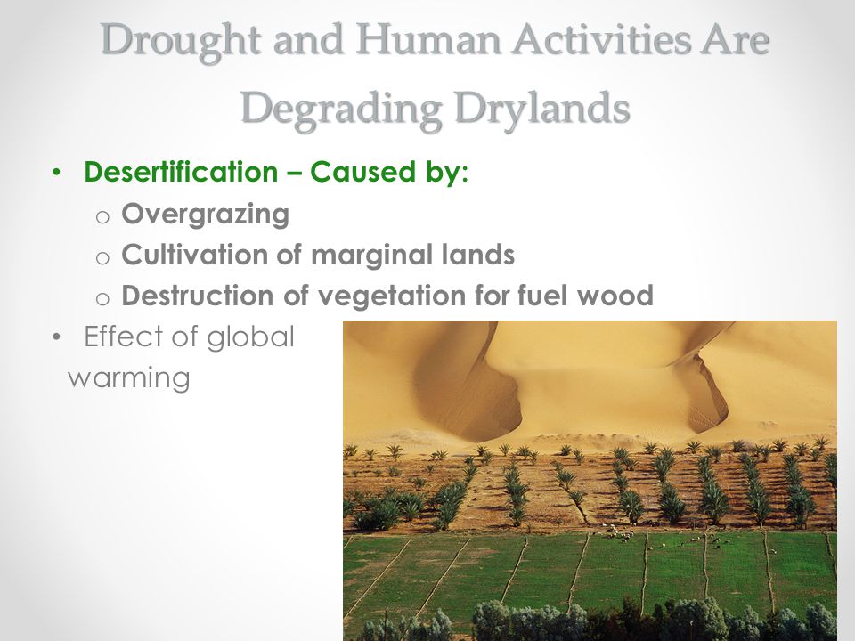 Drought and Human Activities Are Degrading Drylands
