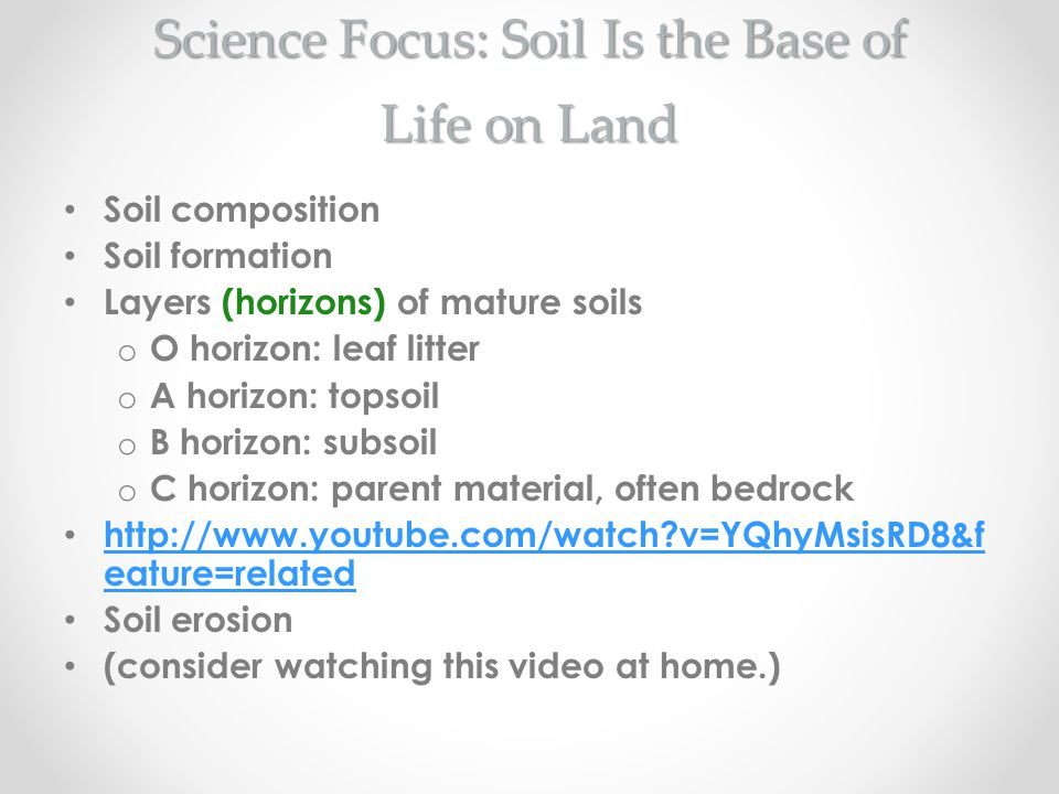 Science Focus: Soil Is the Base of Life on Land