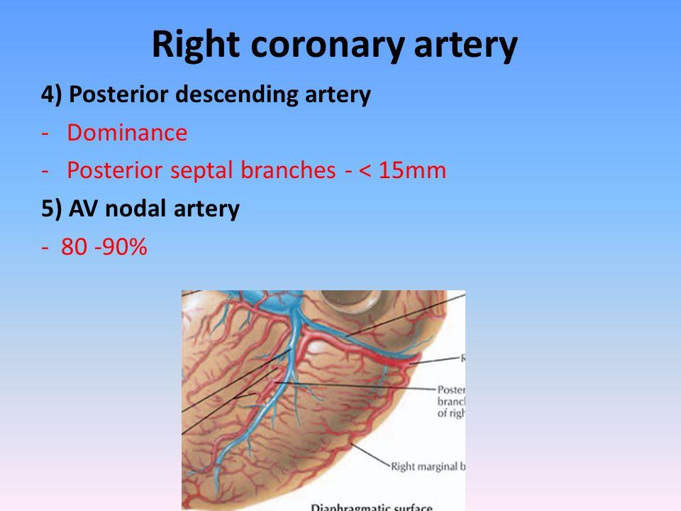 Anatomy Of The Coronary Circulation Angiographic Visualization