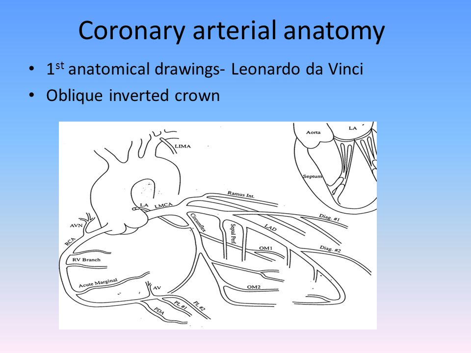 Anatomy of the coronary circulation & Angiographic VISUALIZATION ...