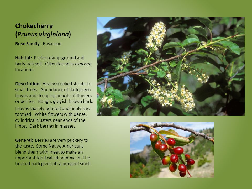 Celebrating Wildflowers - ppt download