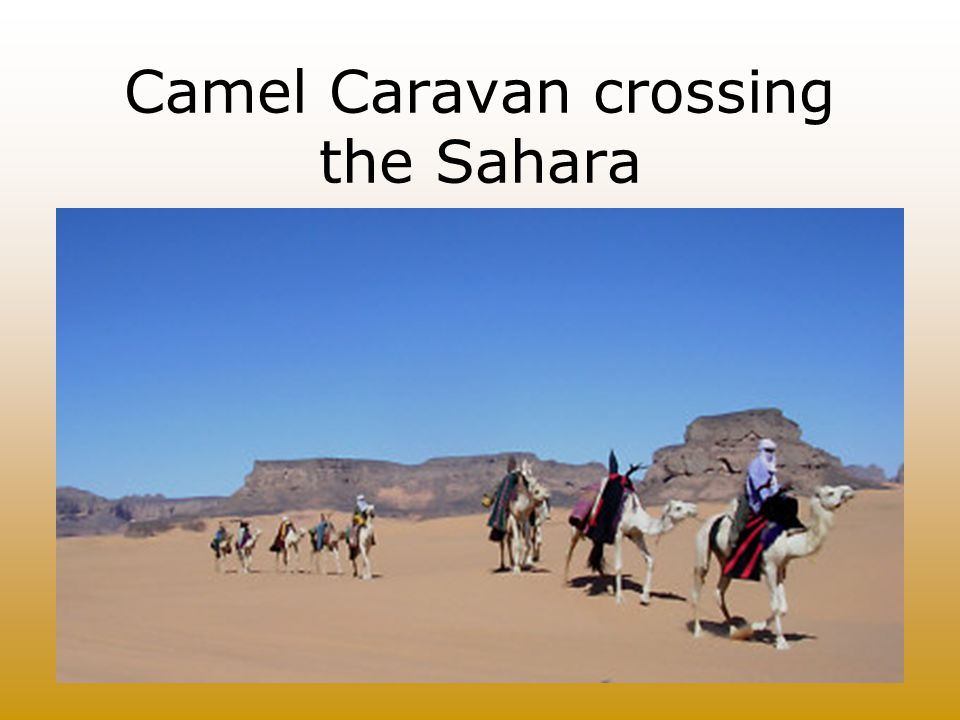 Camel Caravan crossing the Sahara