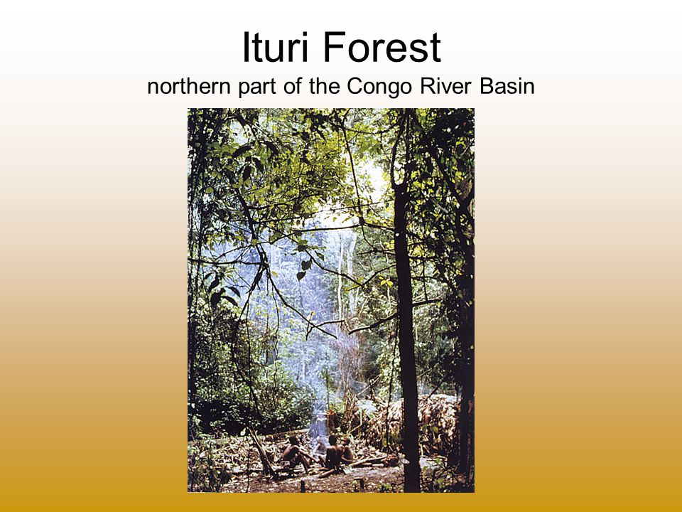 Ituri Forest northern part of the Congo River Basin