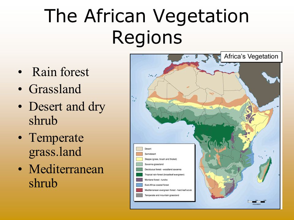 The African Vegetation Regions