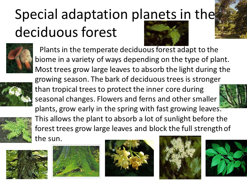 the deciduous forest location