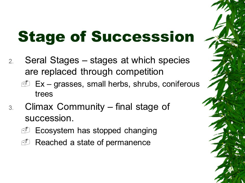 final stage of succession