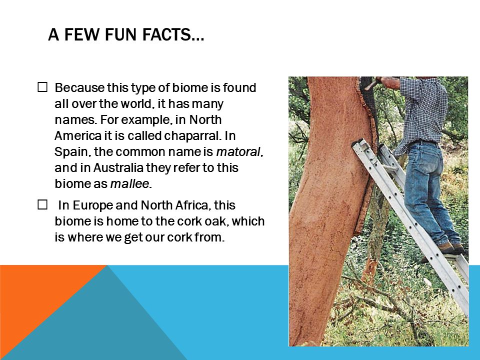 chaparral biome fun facts