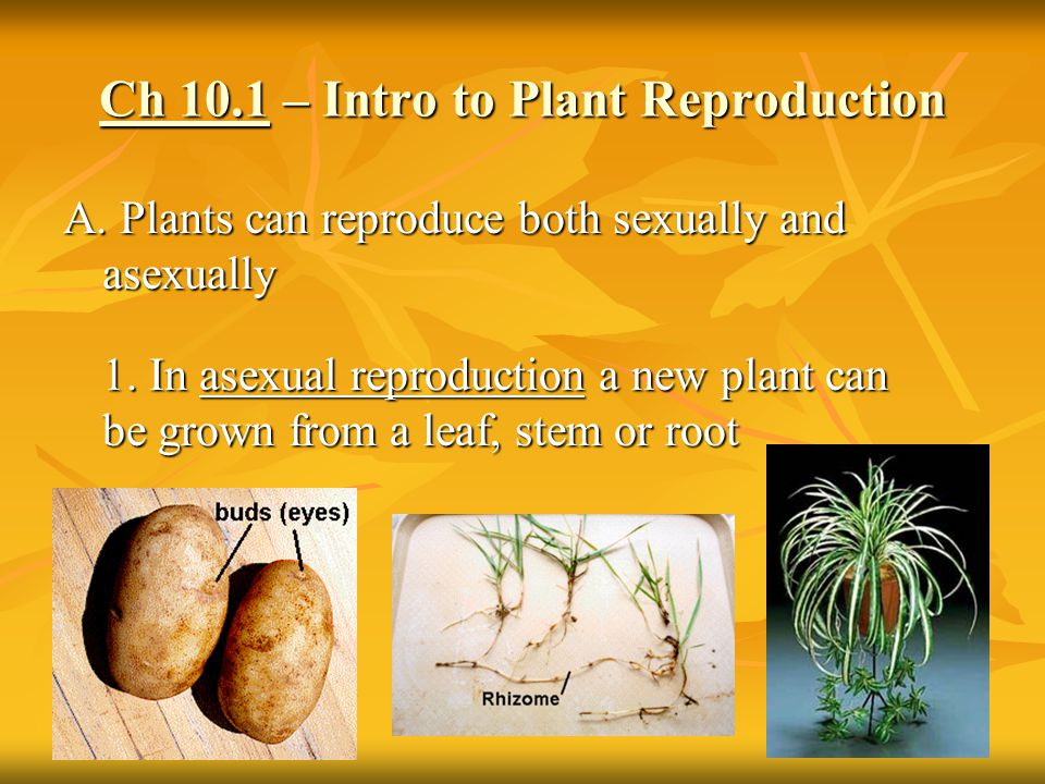 What plants reproduce both sexually and asexually
