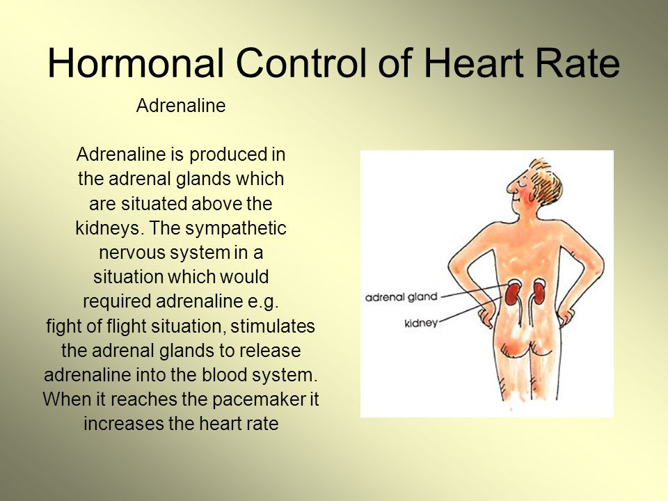 Hormonal Control of Heart Rate