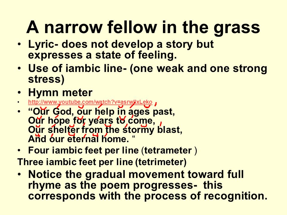 analysis of a narrow fellow in the grass