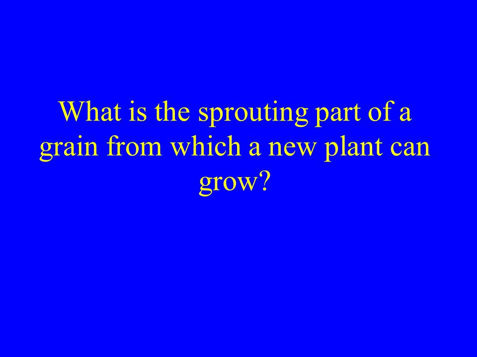 What is the sprouting part of a grain from which a new plant can grow
