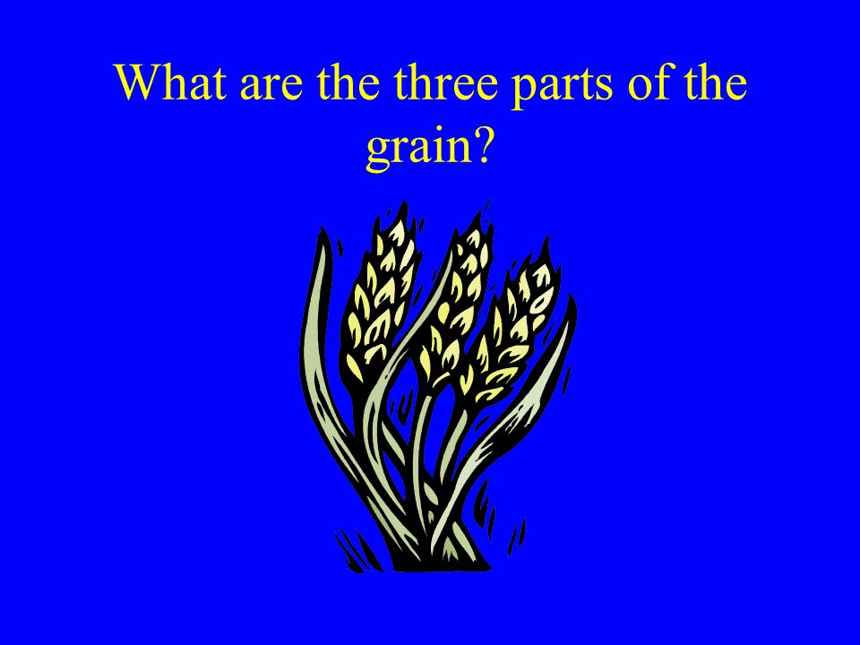 What are the three parts of the grain