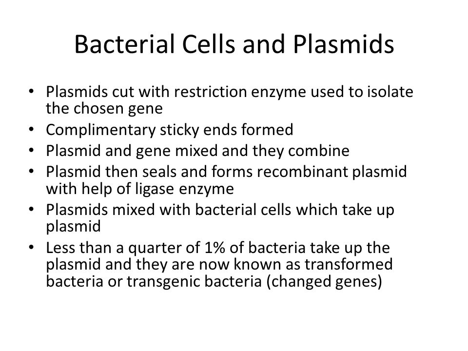 Bacterial Cells and Plasmids