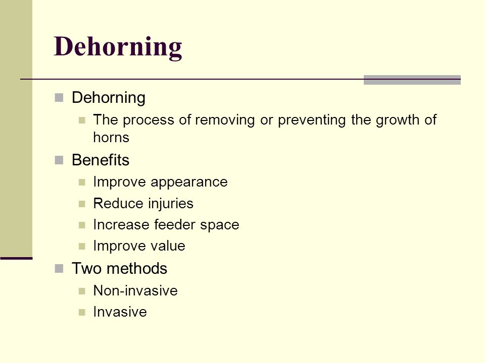 Dehorning, Castrating and Docking - ppt video online download