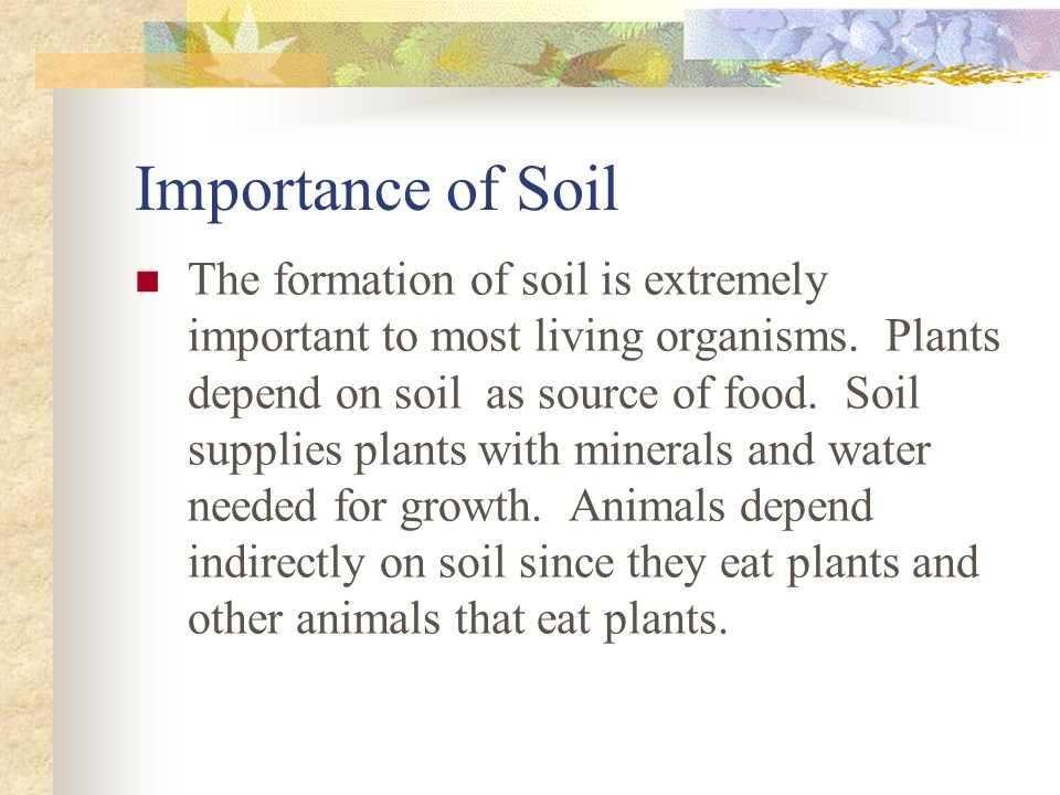 Importance of Soil