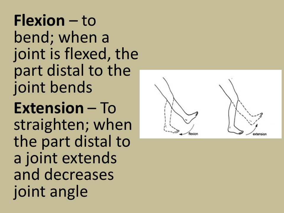 Flexion – to bend; when a joint is flexed, the part distal to the joint bends