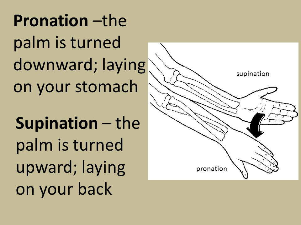Pronation –the palm is turned downward; laying on your stomach