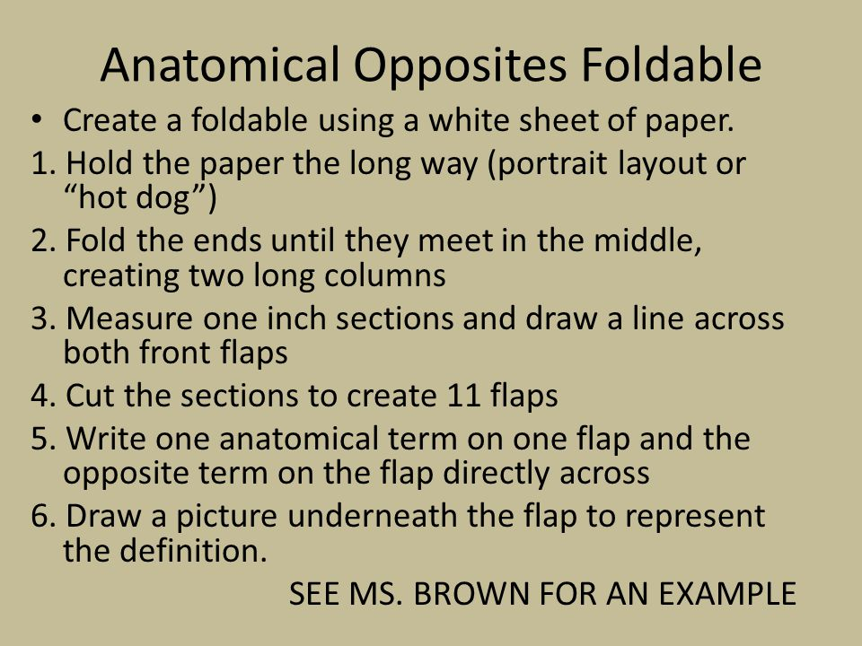 Anatomical Opposites Foldable