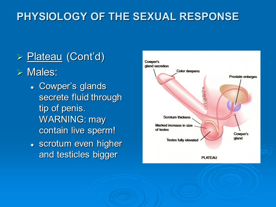 Orgasm and physiological