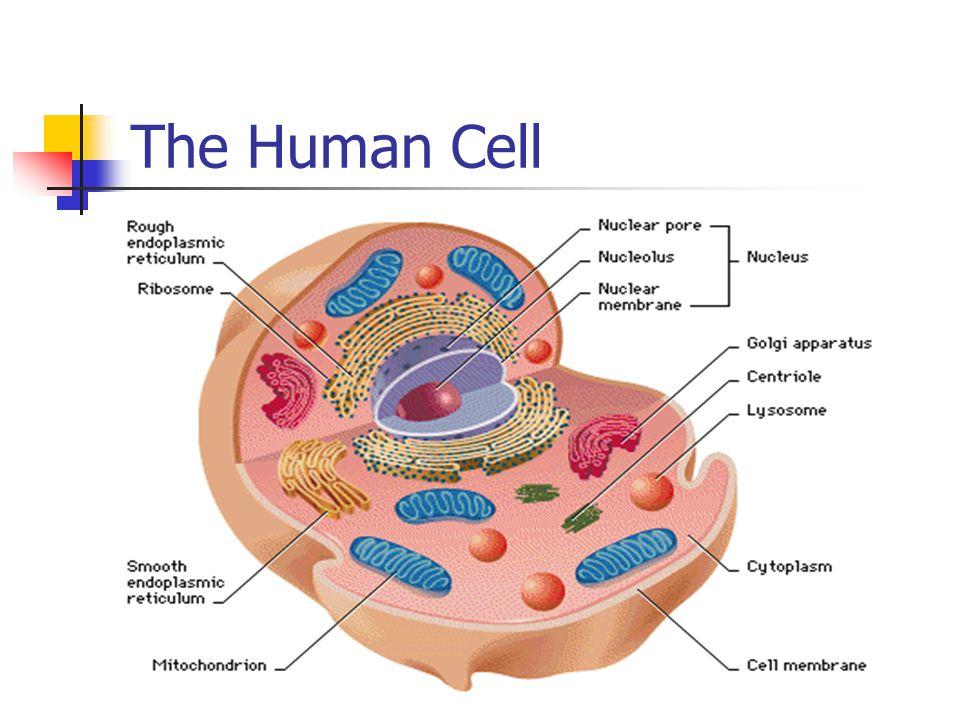 Anatomy Physiology Hm2 Jennifer Fretz Ppt Video Online Download