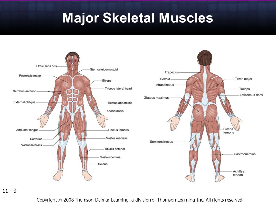Anatomy and Physiology of the Human Body - ppt video online download