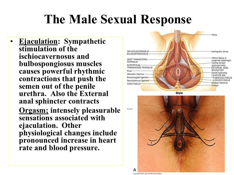 The dangerous denial of sex
