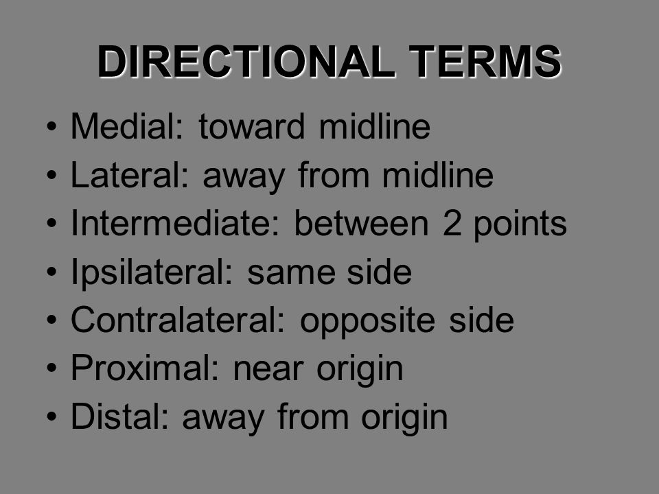 DIRECTIONAL TERMS Medial: toward midline Lateral: away from midline