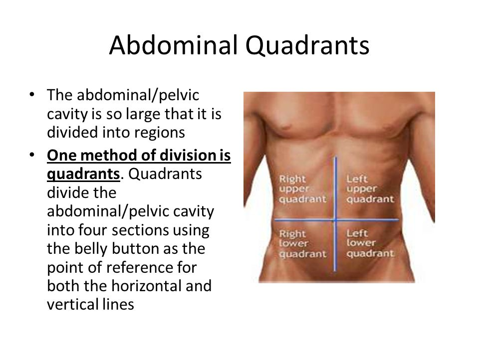 Abdominal Quadrants The abdominal/pelvic cavity is so large that it is divided into regions.