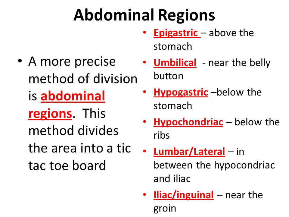 Abdominal Regions Epigastric – above the stomach. Umbilical - near the belly button. Hypogastric –below the stomach.