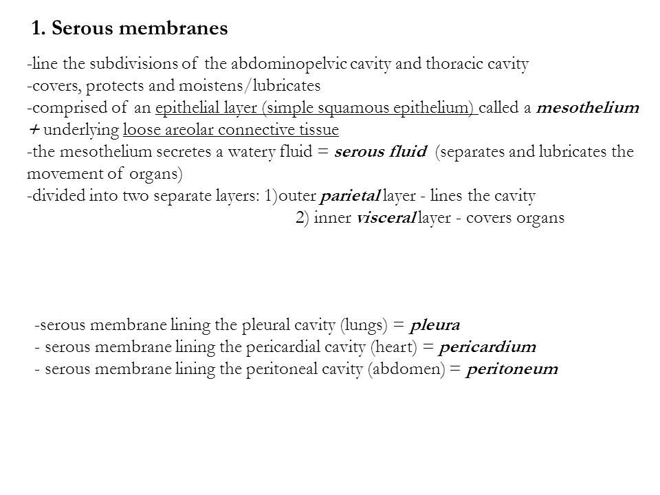 The Lubricating Liquid In Serous Cavities Body Cavities And