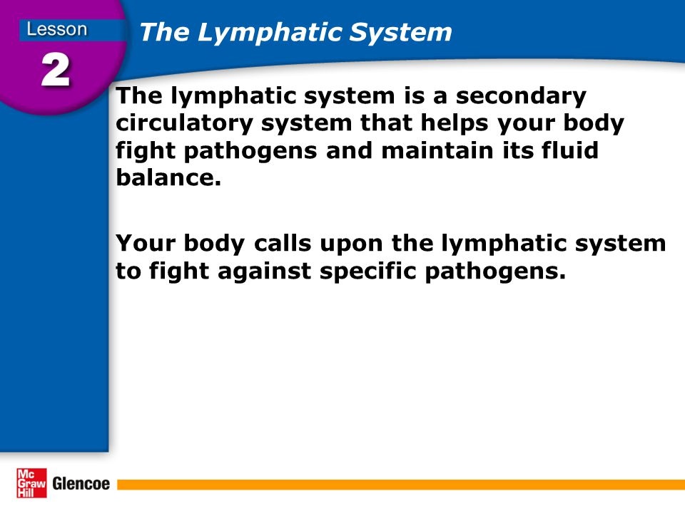 The Lymphatic System The lymphatic system is a secondary circulatory system that helps your body fight pathogens and maintain its fluid balance.