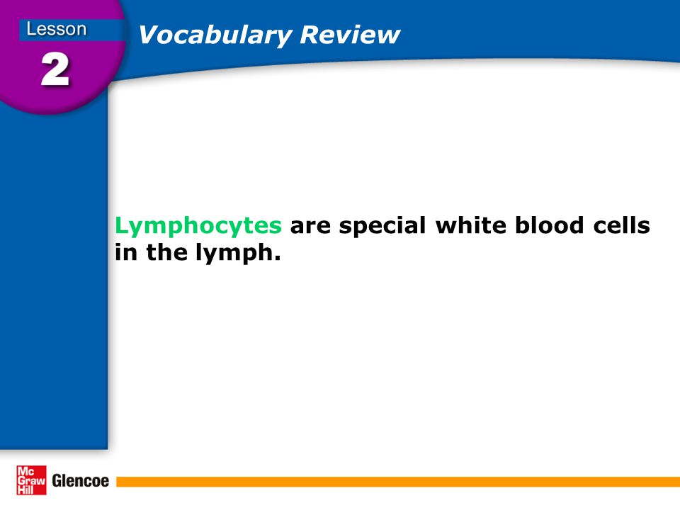 Vocabulary Review Lymphocytes are special white blood cells in the lymph.