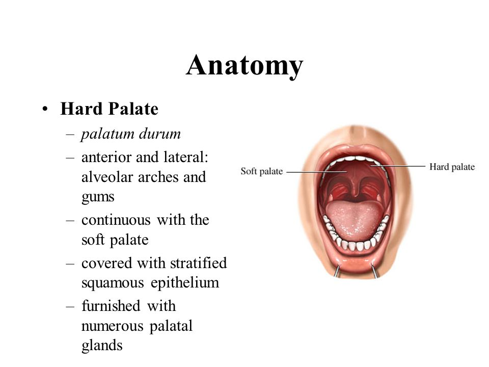 Oral Mucosa Ppt Video Online Download