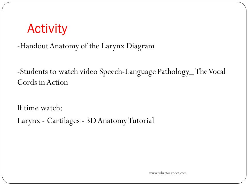 Larynx Anatomy Video Image collections - human body anatomy