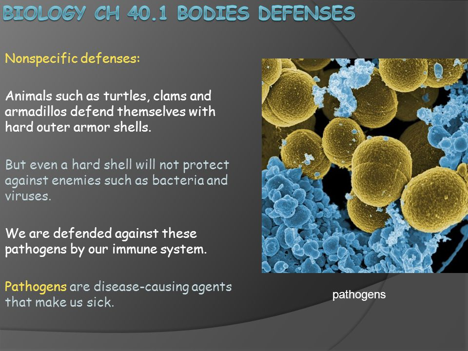 Biology Ch 40.1 Bodies defenses