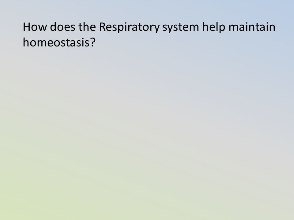 How does the Respiratory system help maintain homeostasis