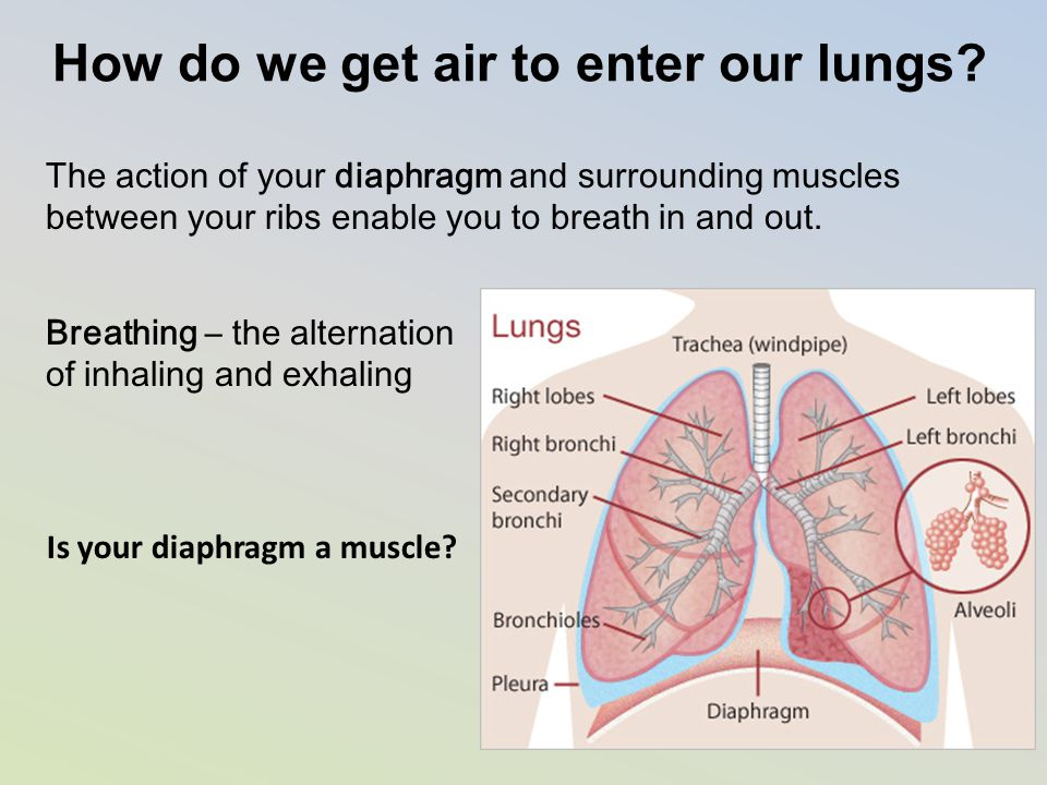 How do we get air to enter our lungs