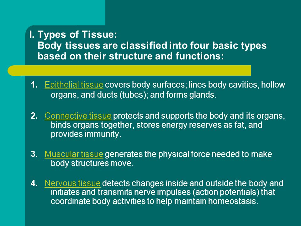 Chapter 5: Tissues Anatomy & Physiology. - ppt download