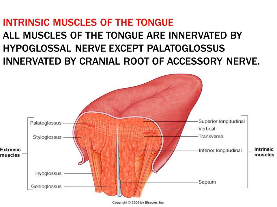 Mouth cavity Dr.ayat eldomouky. - ppt video online download