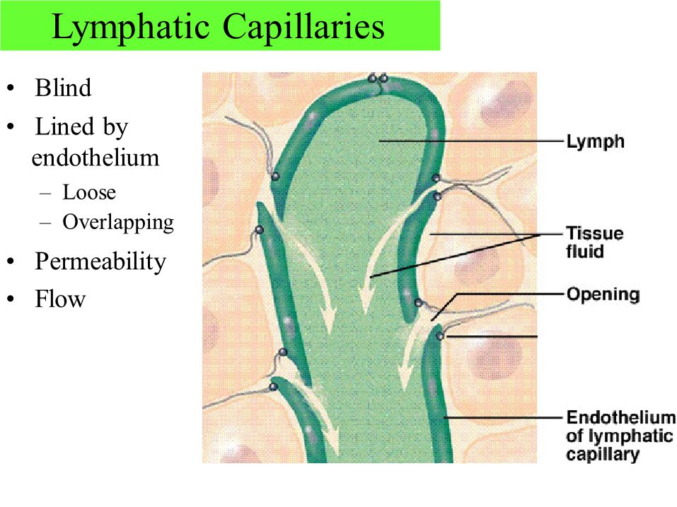 Consists Of Lymph Lymphatic Vessels Lymphatic Tissue Ppt Video