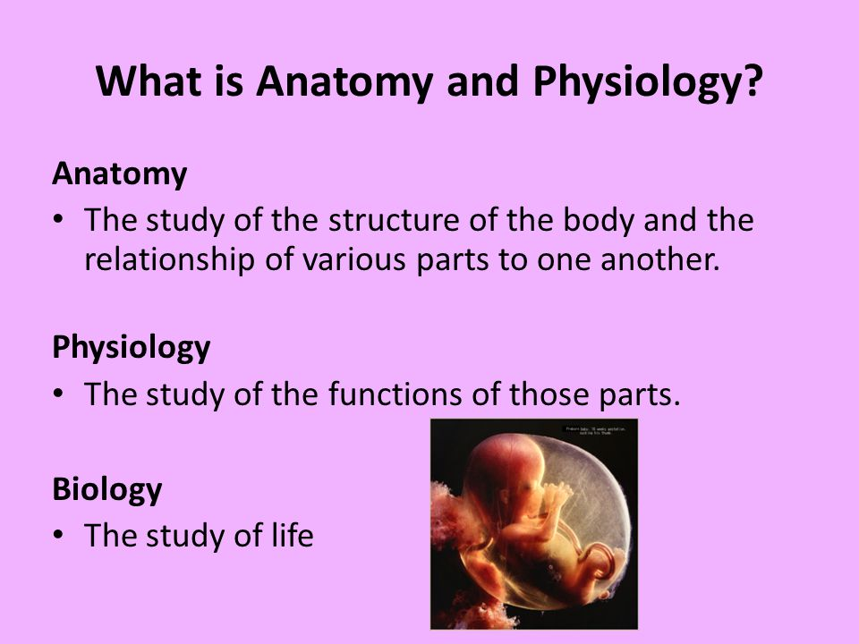 Introduction to Anatomy & Physiology Characteristics of Life - ppt ...