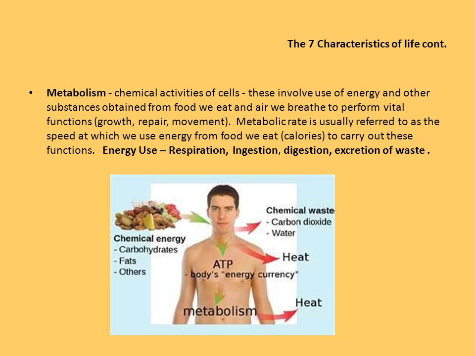 Introduction To Anatomy Physiology Characteristics Of Life Ppt