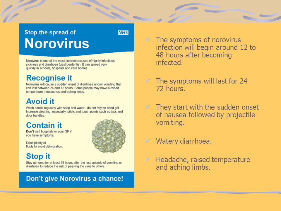 The symptoms of norovirus infection will begin around 12 to 48 hours after becoming infected.